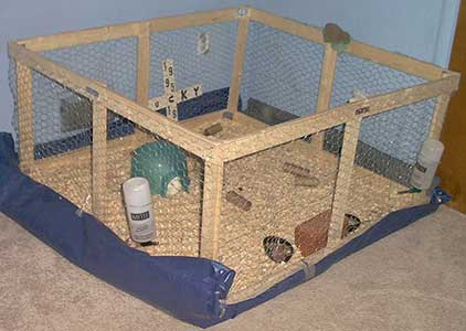 DIY Simple wood and wire guinea pig cage