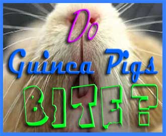 Do guinea pigs bite
