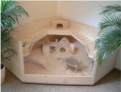 wood guinea pig cage with cutout front