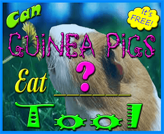 can guinea pigs eat tool