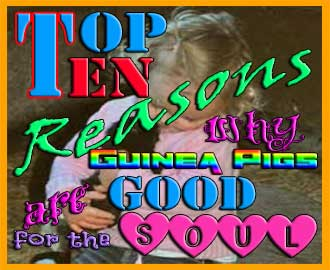 top ten reasons guinea pigs