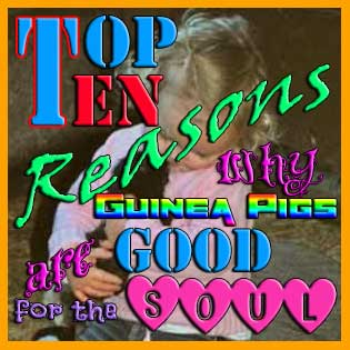 top ten reasons guinea pigs are