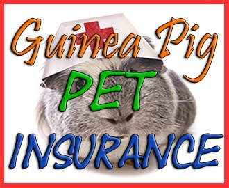 Guinea pig pet insurance