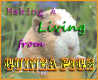 making a living from guinea pigs