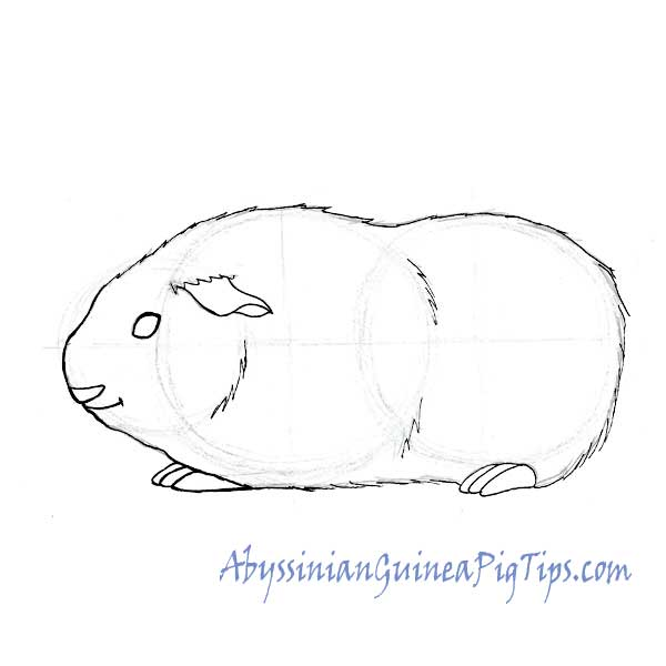 Step 4 guinea pig drawing