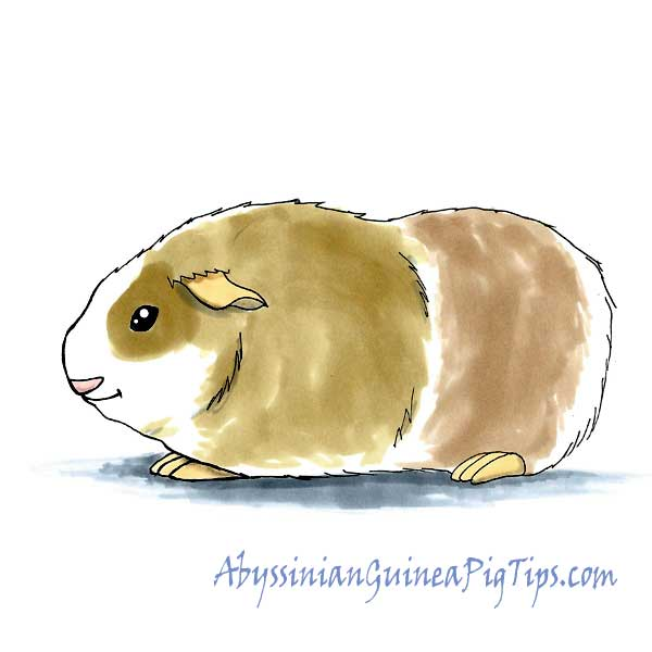 How To Draw A Guinea Pig on ink eraser