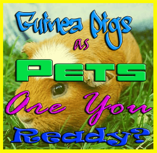 are you ready for guinea pigs as pets