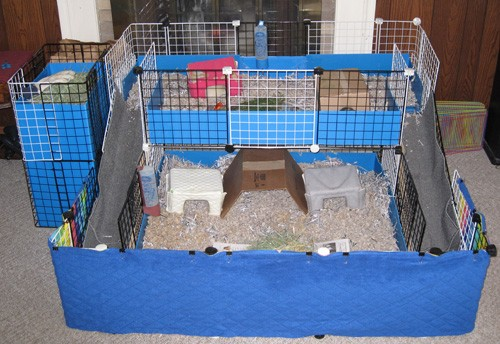 Make your own guinea pig cage abyssinian guinea pig tips for How to guinea pig cage