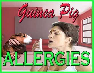 Guinea Pig Allergies