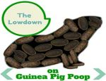 The Lowdown on Guinea Pig Poop