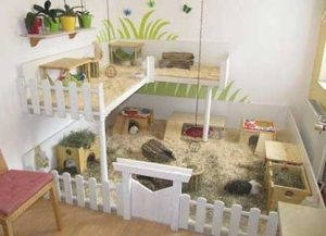 picket fence guinea pig cage
