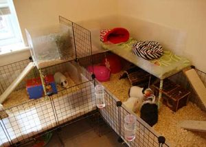 corrugated plastic and cubes guinea pig cage
