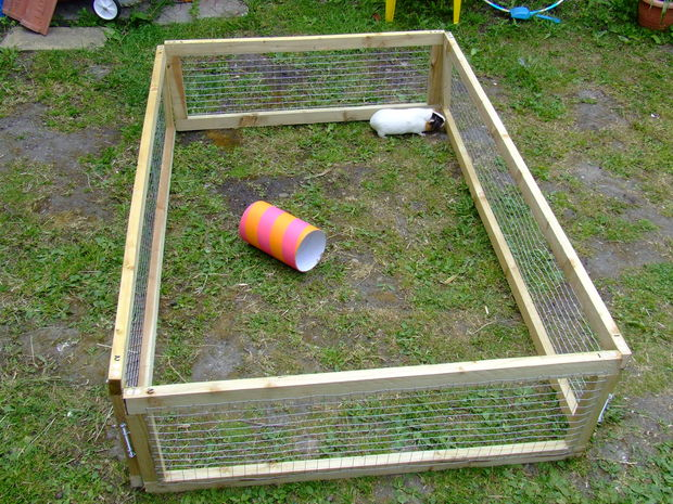outdoor guinea pig run ideas abyssinian guinea pig tips