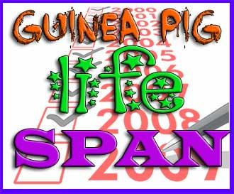 guinea-pig-life-span
