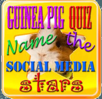 guinea pig social media stars