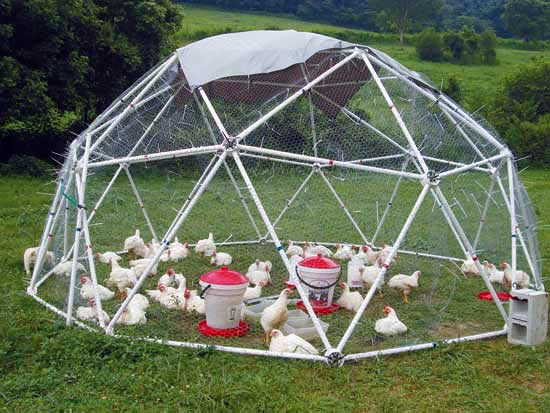 PVC guinea pig dome run