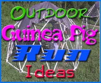 guinea pig run ideas