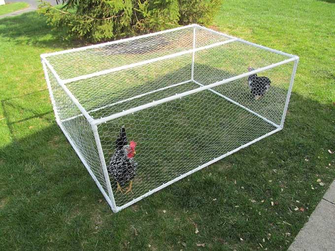 Outdoor guinea pig run ideas abyssinian guinea pig tips for How to build a guinea pig house