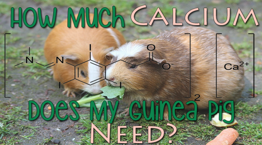 how much calcium does my guinea pig need